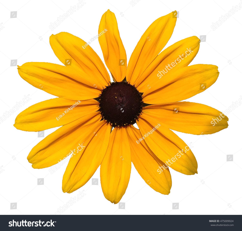 Yellow Daisy Flower Clip Art Stock Photo Edit Now 475009024