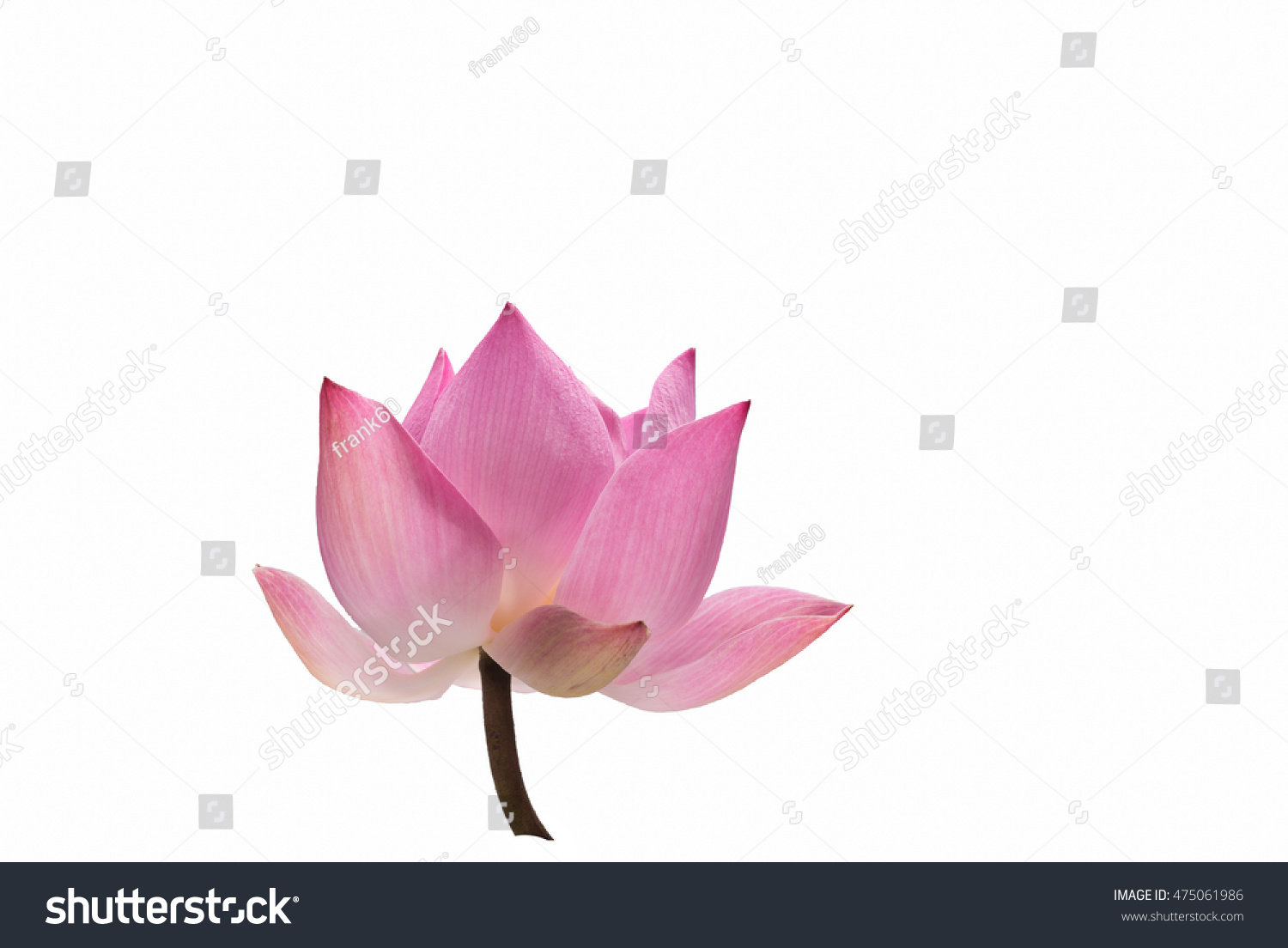 Water Lily Flower Lotus And Green Background The Lotus Flower