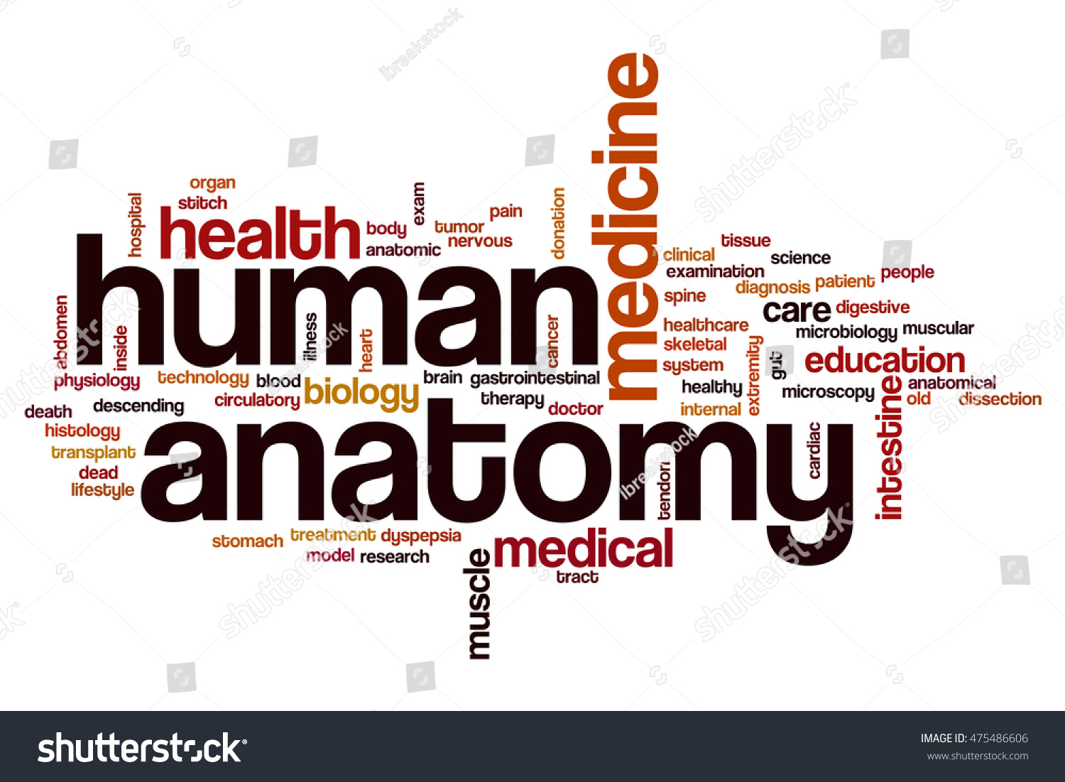 Human Anatomy Word Cloud Concept Stock Illustration 475486606 ...