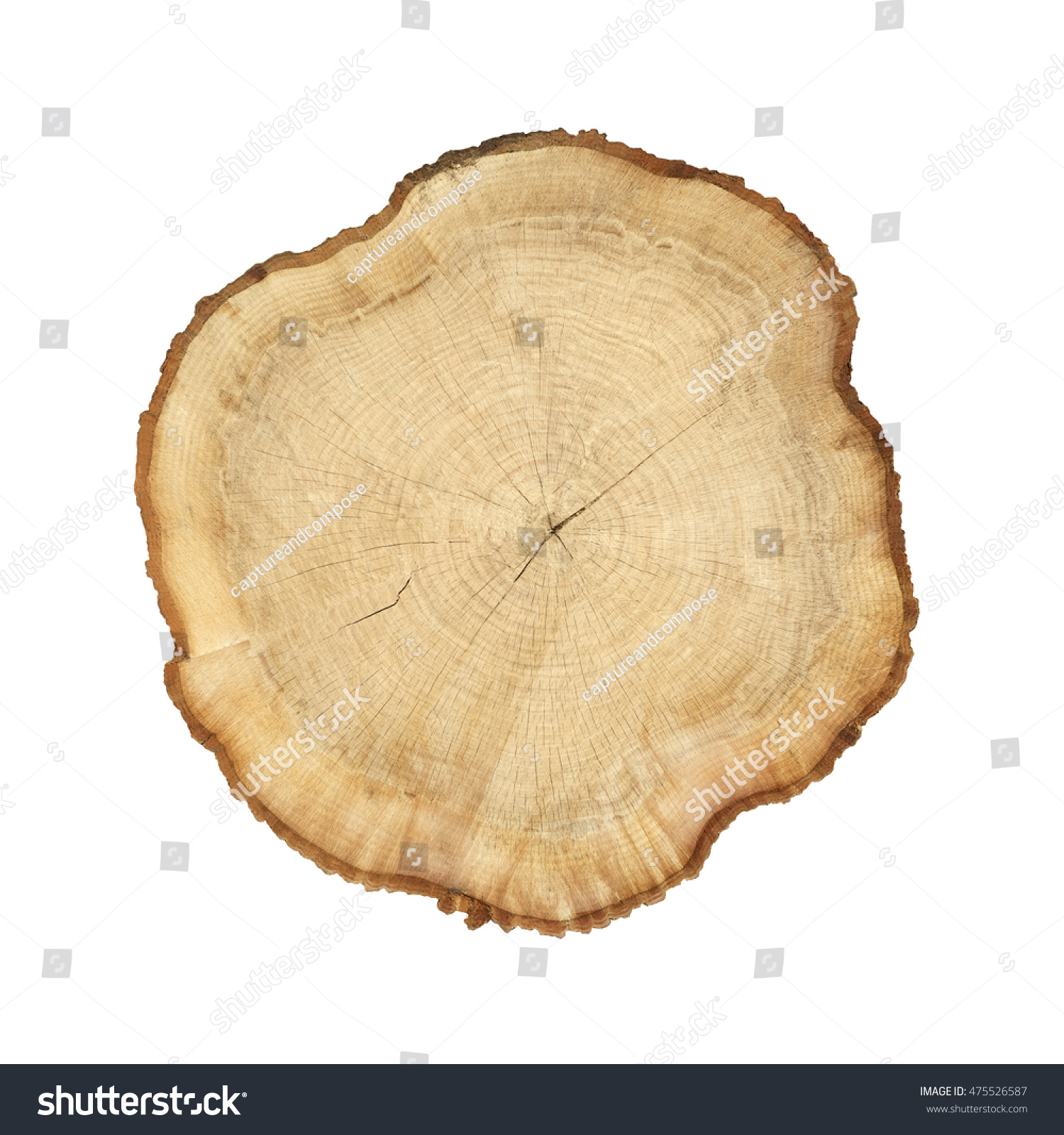 Cross section cut wood tree trunk stock photo 475526587 for Wood trunk slices