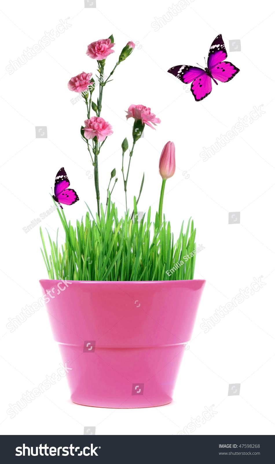 Pink Pot Green Grass Pink Flowers Stock Photo Edit Now 47598268
