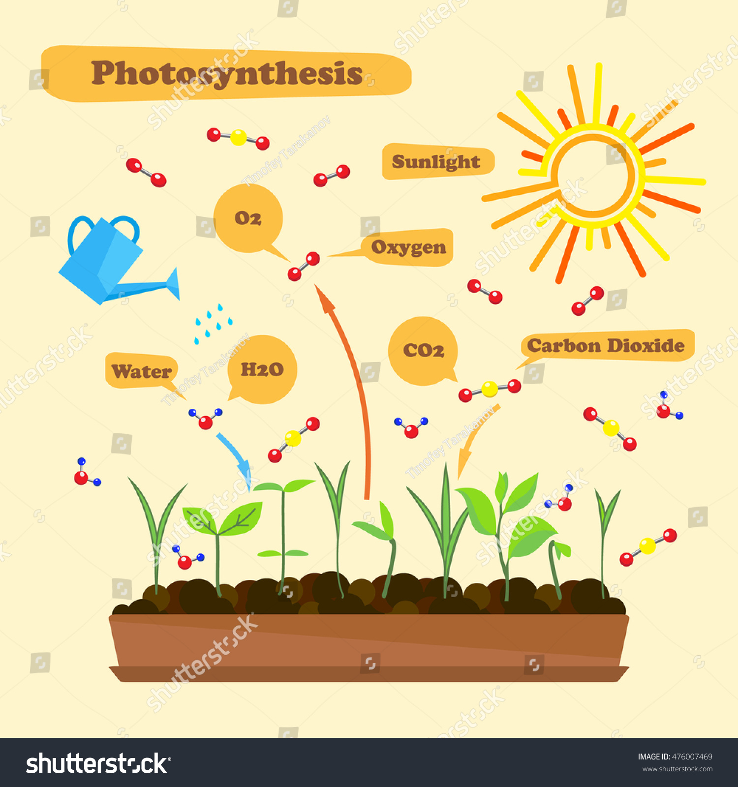 photosynthesis process diagram Photosynthesis converts light energy into the chemical energy of sugars and other organic compounds this process consists of a series of chemical reactions that.