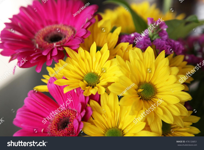 Closeup Beautiful Yellow Pink Daisy Gerber Stock Photo Edit Now