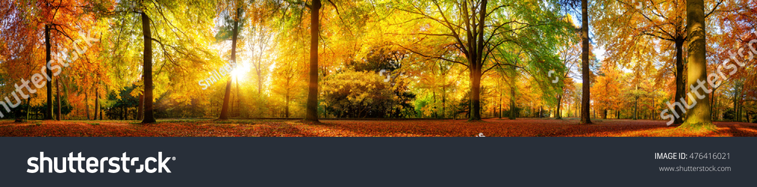 Extra wide panorama of a gorgeous forest in autumn, a scenic landscape with pleasant warm sunshine #476416021