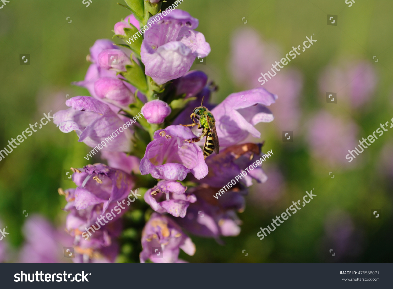 Light Purple Flowers Stock Photo Edit Now 476588071 Shutterstock