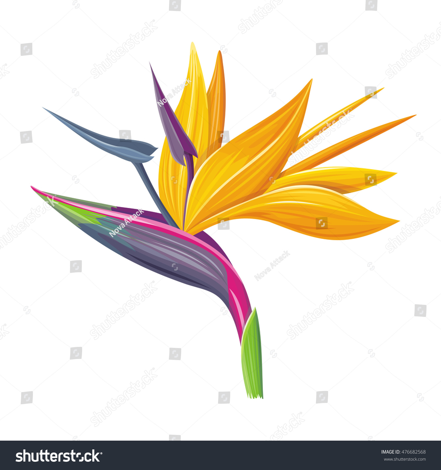 Bird paradise flower isolated on white stock vector 476682568 bird of paradise flower isolated on a white background vector illustration buycottarizona