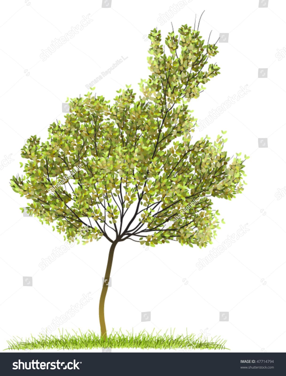 nature spring green tree - photo #36