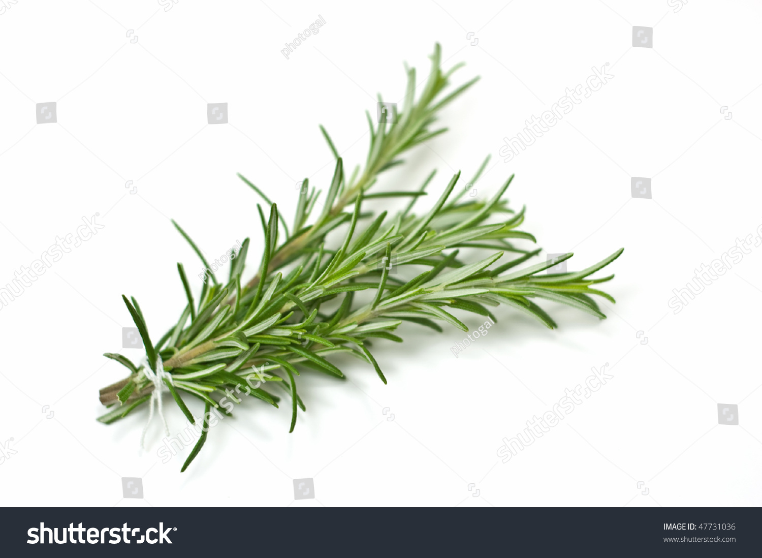 stock-photo-fresh-rosemary-bunch-with-se