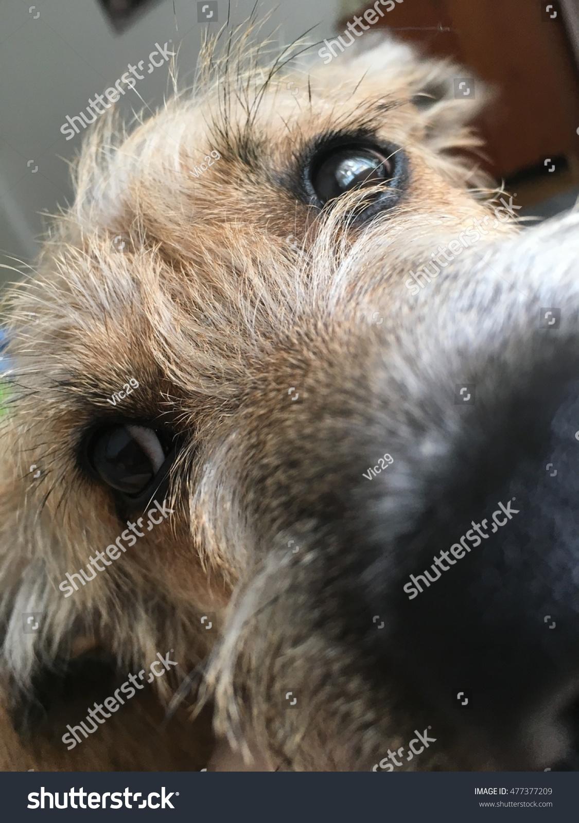 Close Cute Puppys Face Stock Shutterstock