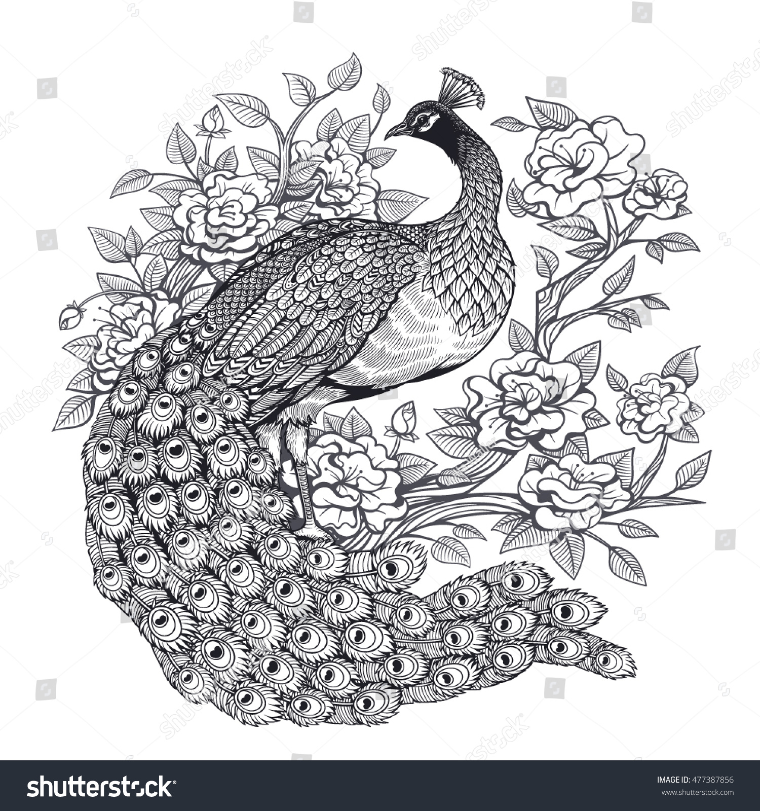vector black white floral peacock illustration stock vector