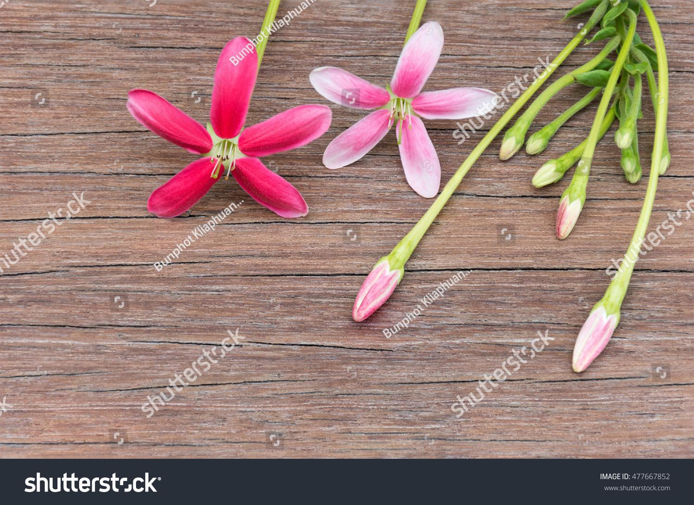 Rangoon creeper blossom pink red flowers stock photo royalty free rangoon creeper blossom pink red flowers stock photo royalty free 477667852 shutterstock mightylinksfo
