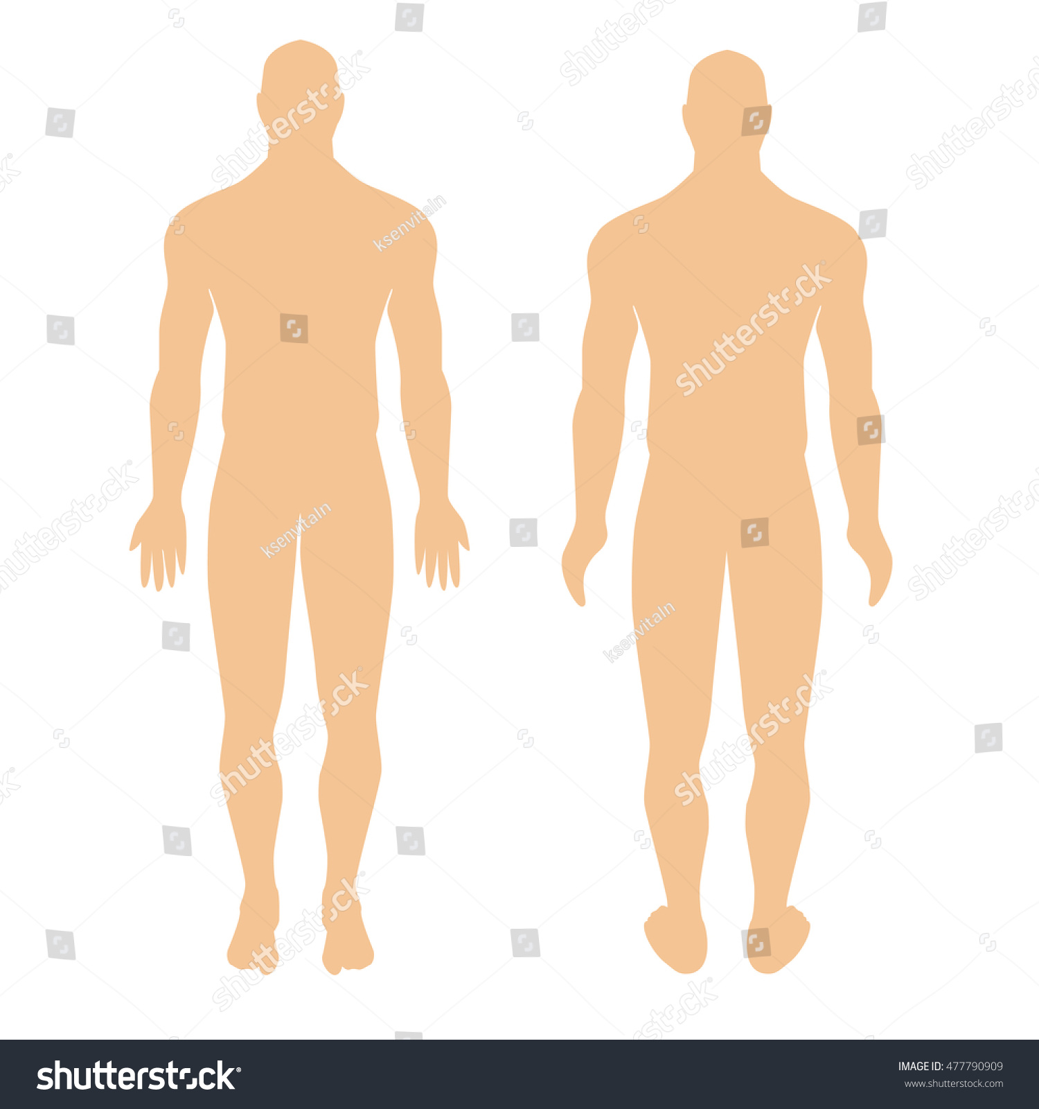 Royalty-free human anatomical man silhouette view… #477790909 Stock ...