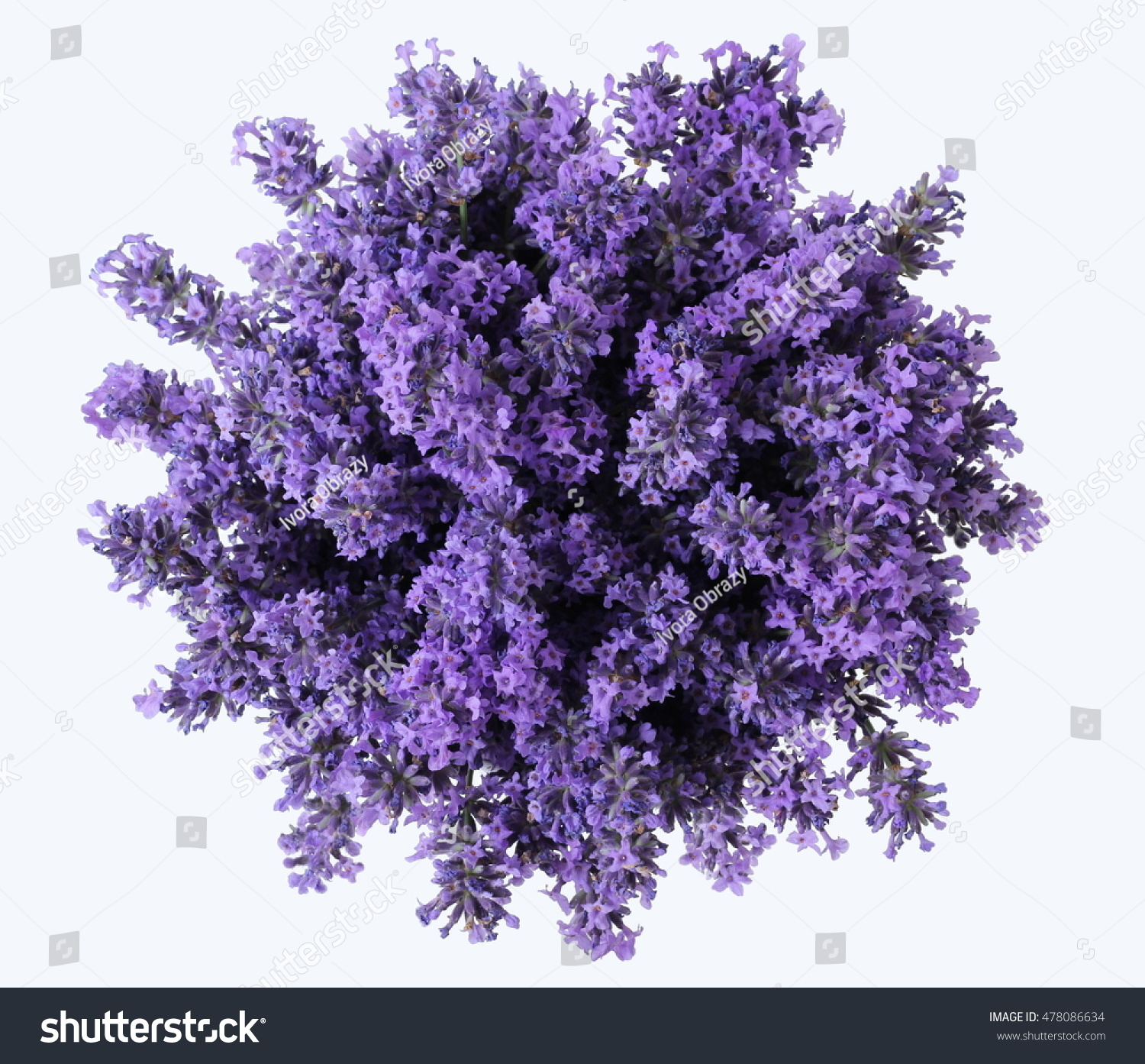 Top View Bouquet Purple Lavender Flowers Stock Photo & Image ...