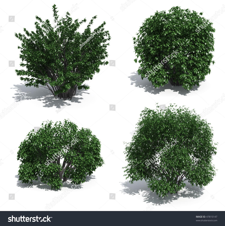 Bushes Isolated On White Background Stock Photo 47815147 ...
