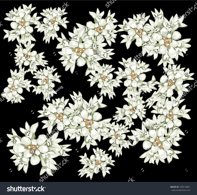 Australian Native Flowers White On Black Stock Illustration