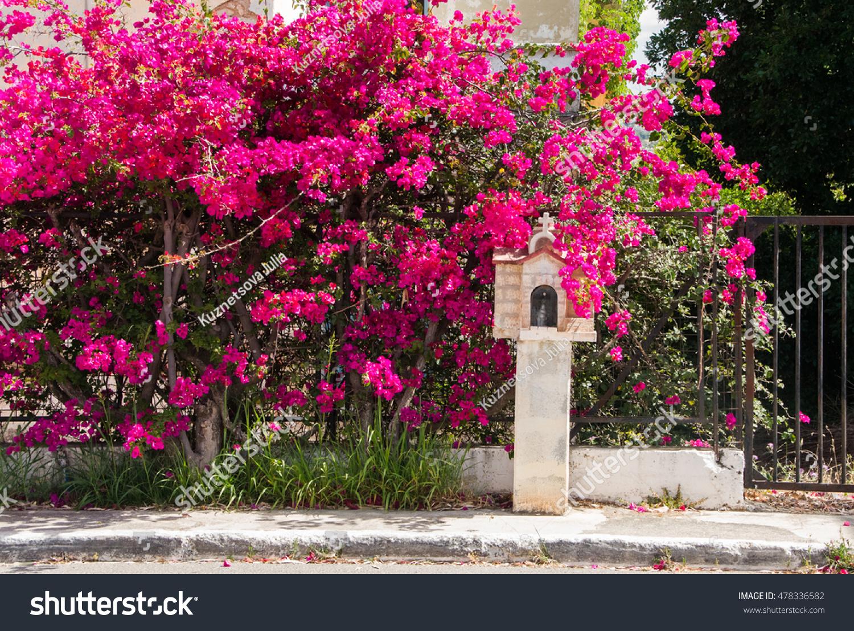 Bright Pink Flowering Bushes Minichapel On Stock Photo Edit Now
