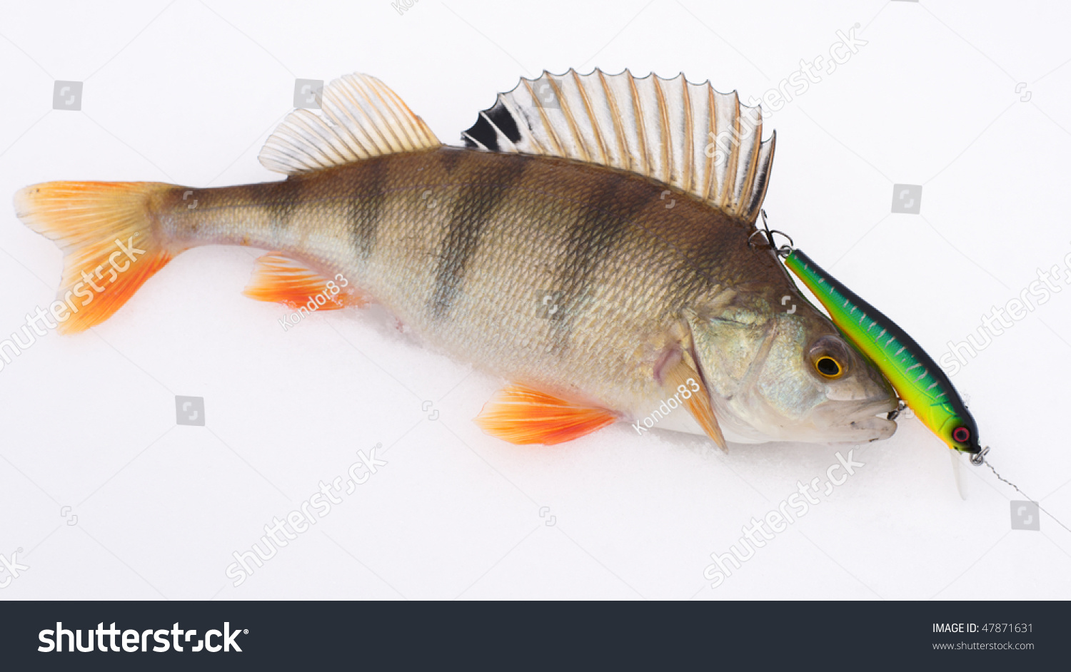 How to catch a perch on spinning