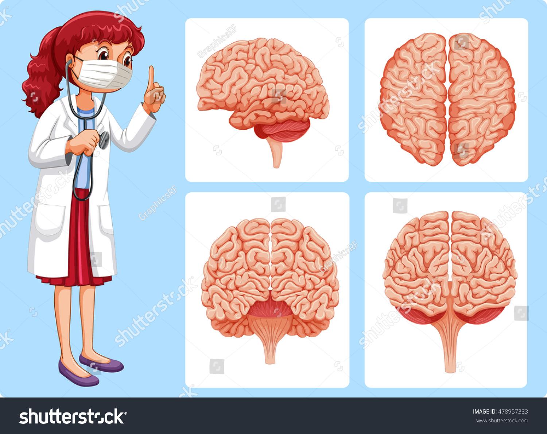 Doctor Brain Diagrams Illustration Stock Vector Royalty Free