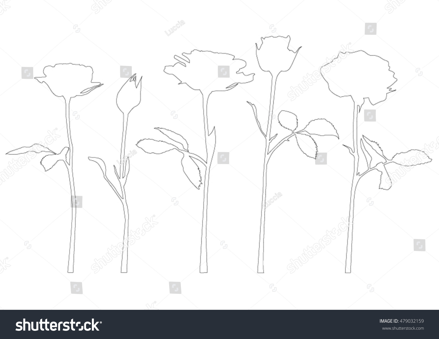 Contour Line Drawing Rose : Roses on stem black silhouette outlines stock vector royalty free