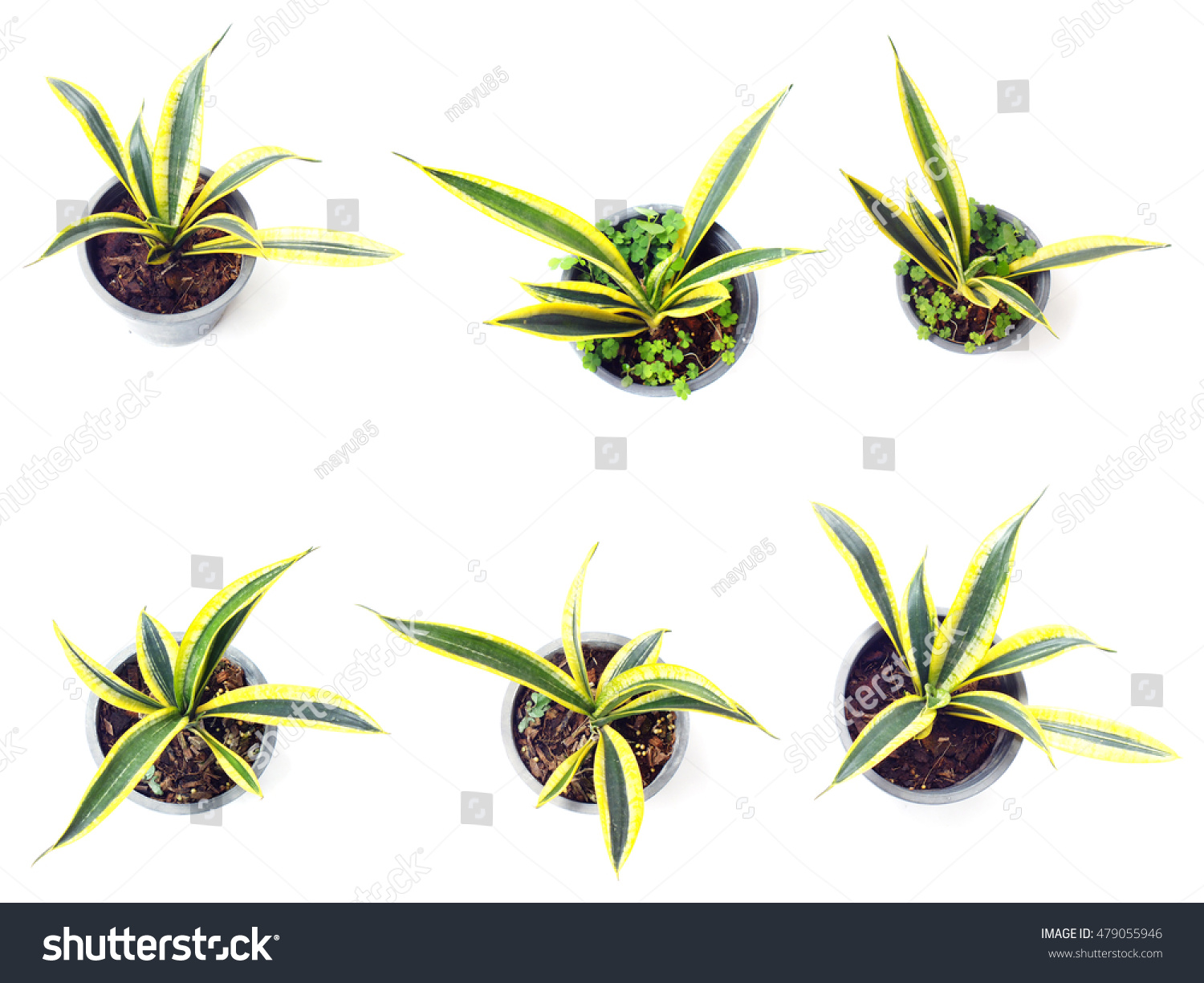 Cheap Fresh Of Green House Plants Top View Isolated On White Background With