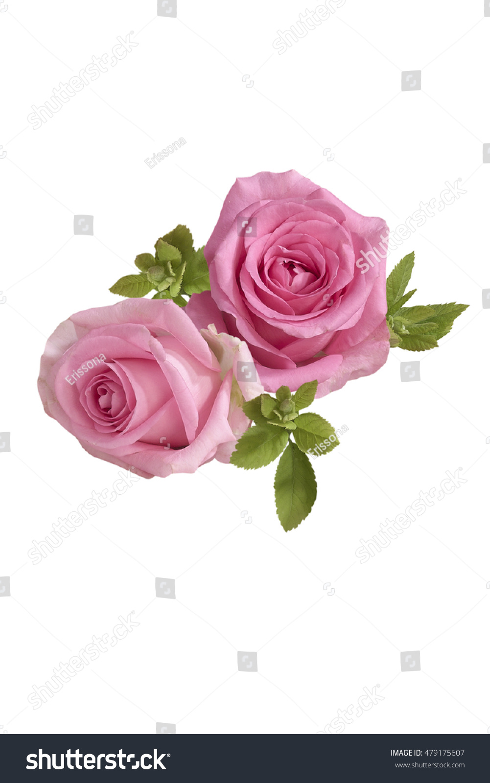 Bunch Of Pink Roses Isolated On White Background Ez Canvas
