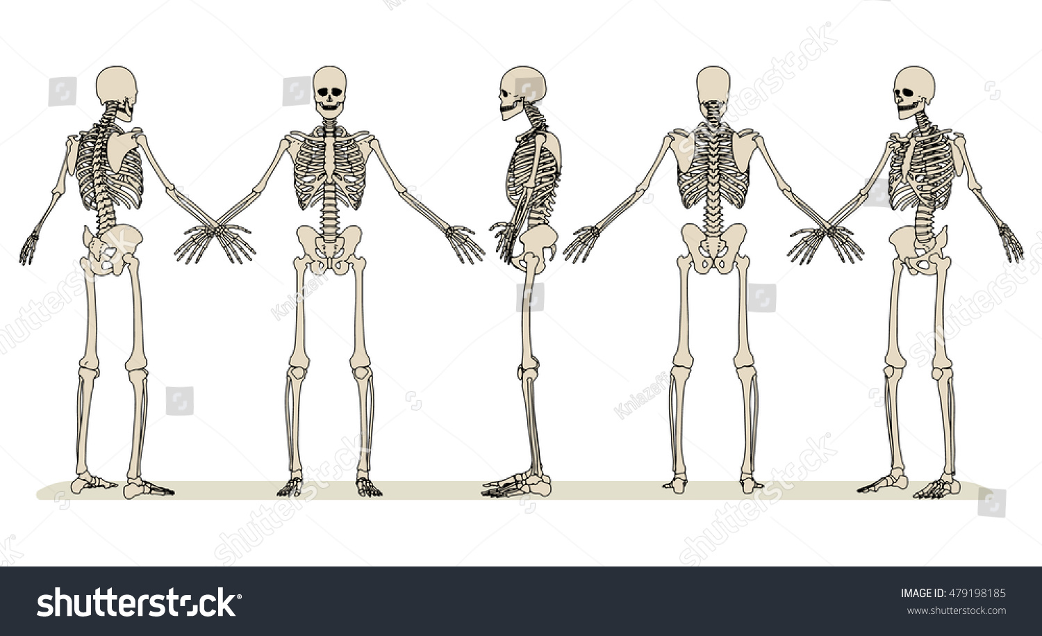 Set Images Human Skeleton Different Angles Stock Vector Royalty