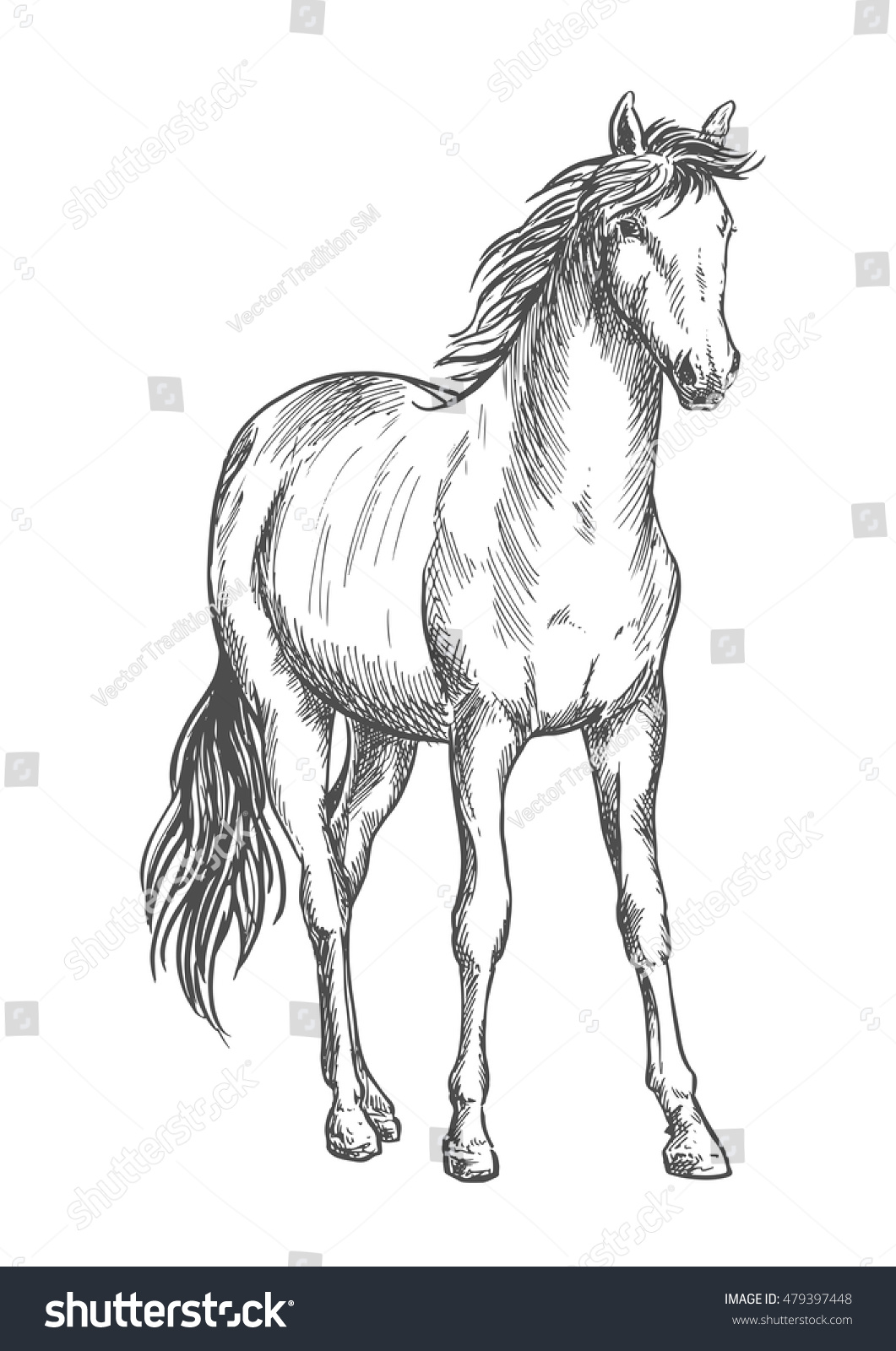 Beautiful White Horse Standing Pencil Sketch Stock Vector Royalty Free 479397448