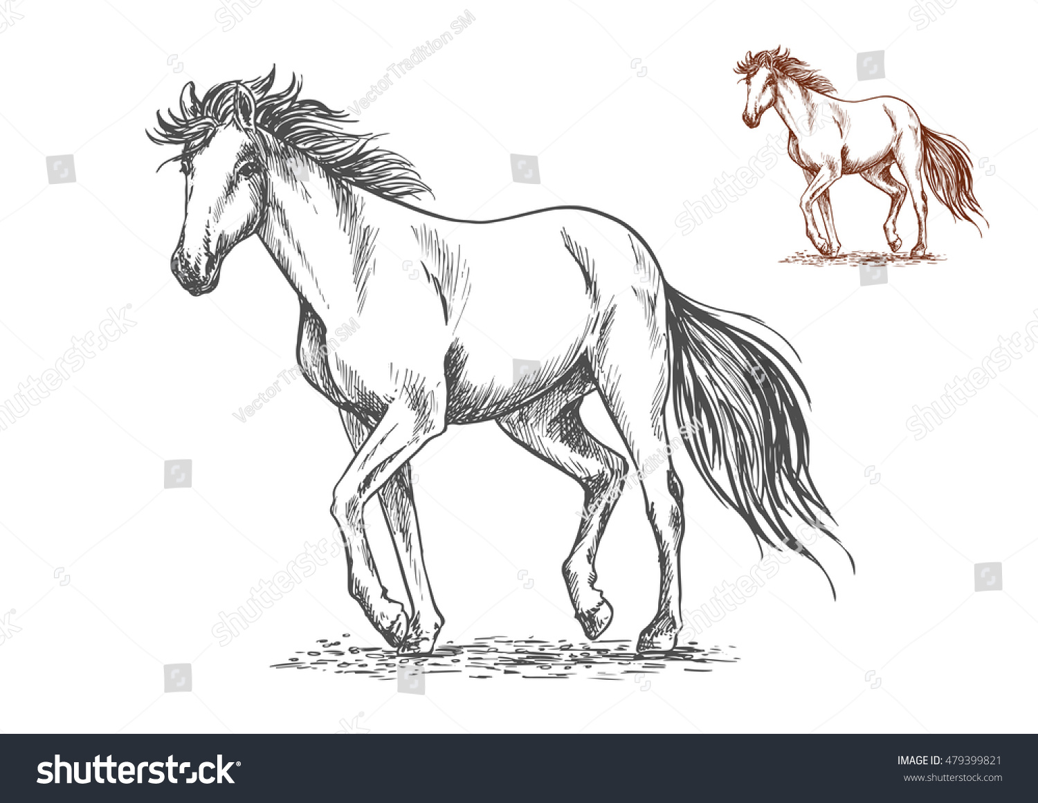 Running white horse pencil sketch portrait mustang with stamping hoofs gait and wavy tail on