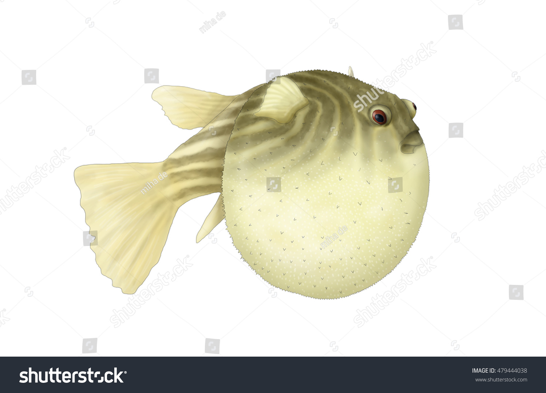 Puffer Fish Stock Illustration 479444038 - Shutterstock
