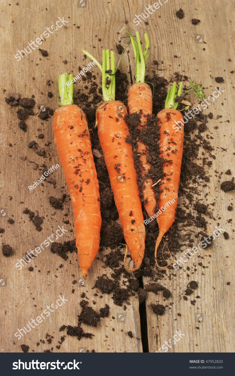 Fresh Carrots And Soil On Old Weathered Wood Stock Photo ...
