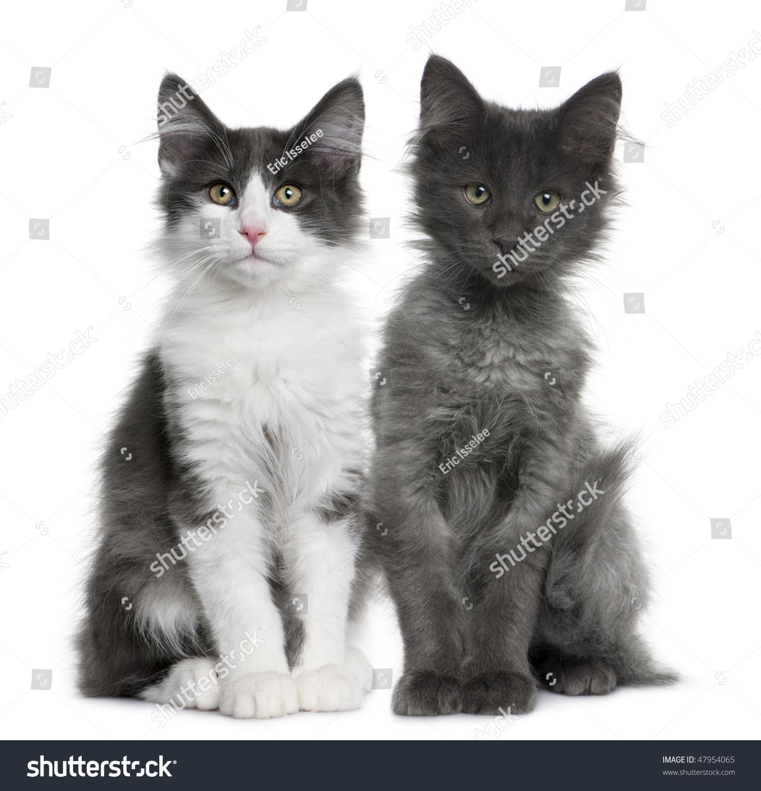 dansk pornofilm cat people oslo