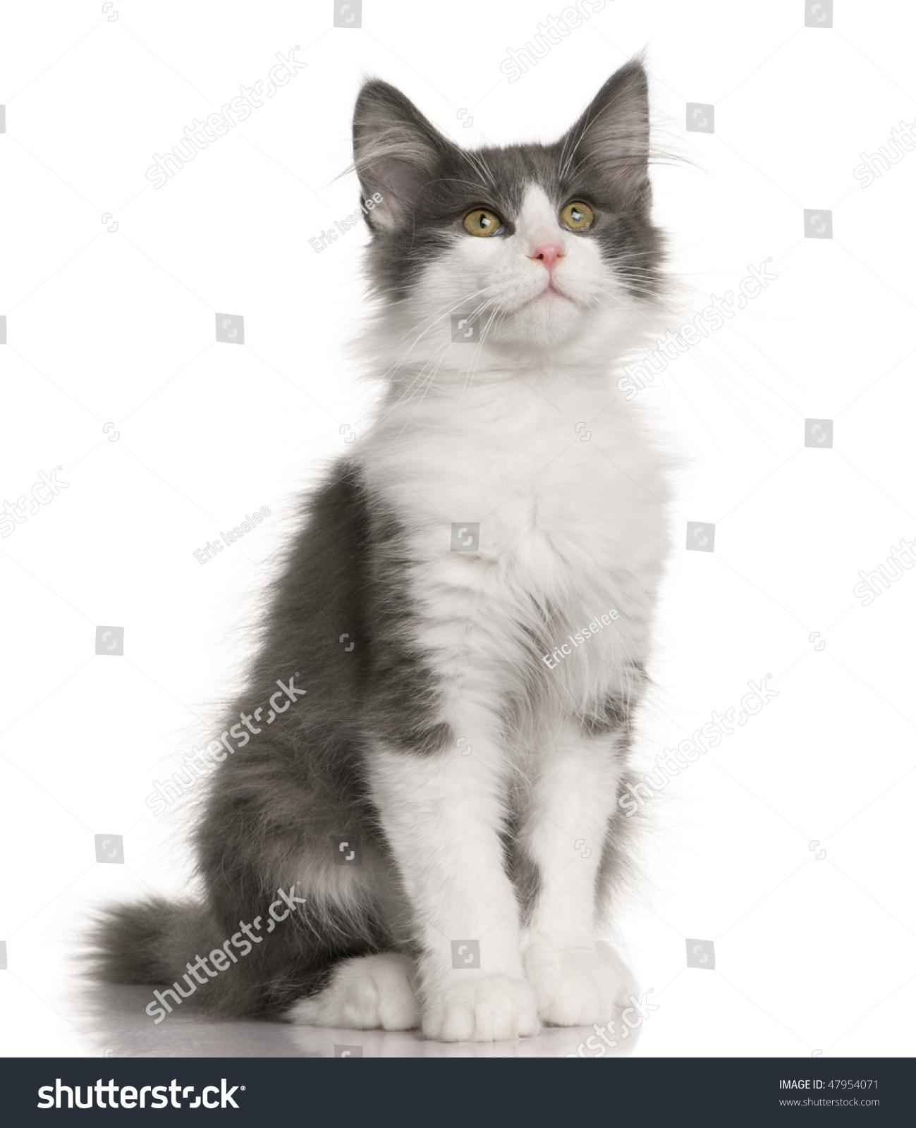 what does cat milk taste like