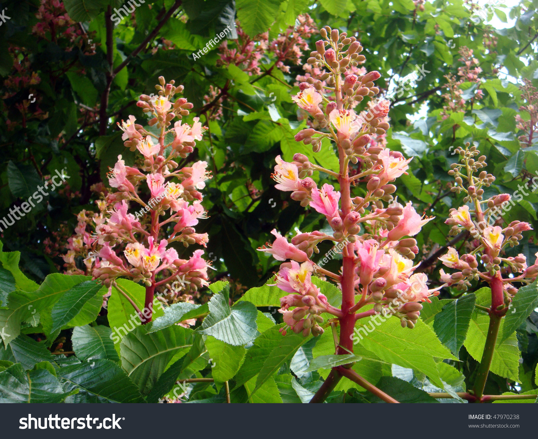 Bloom in latin