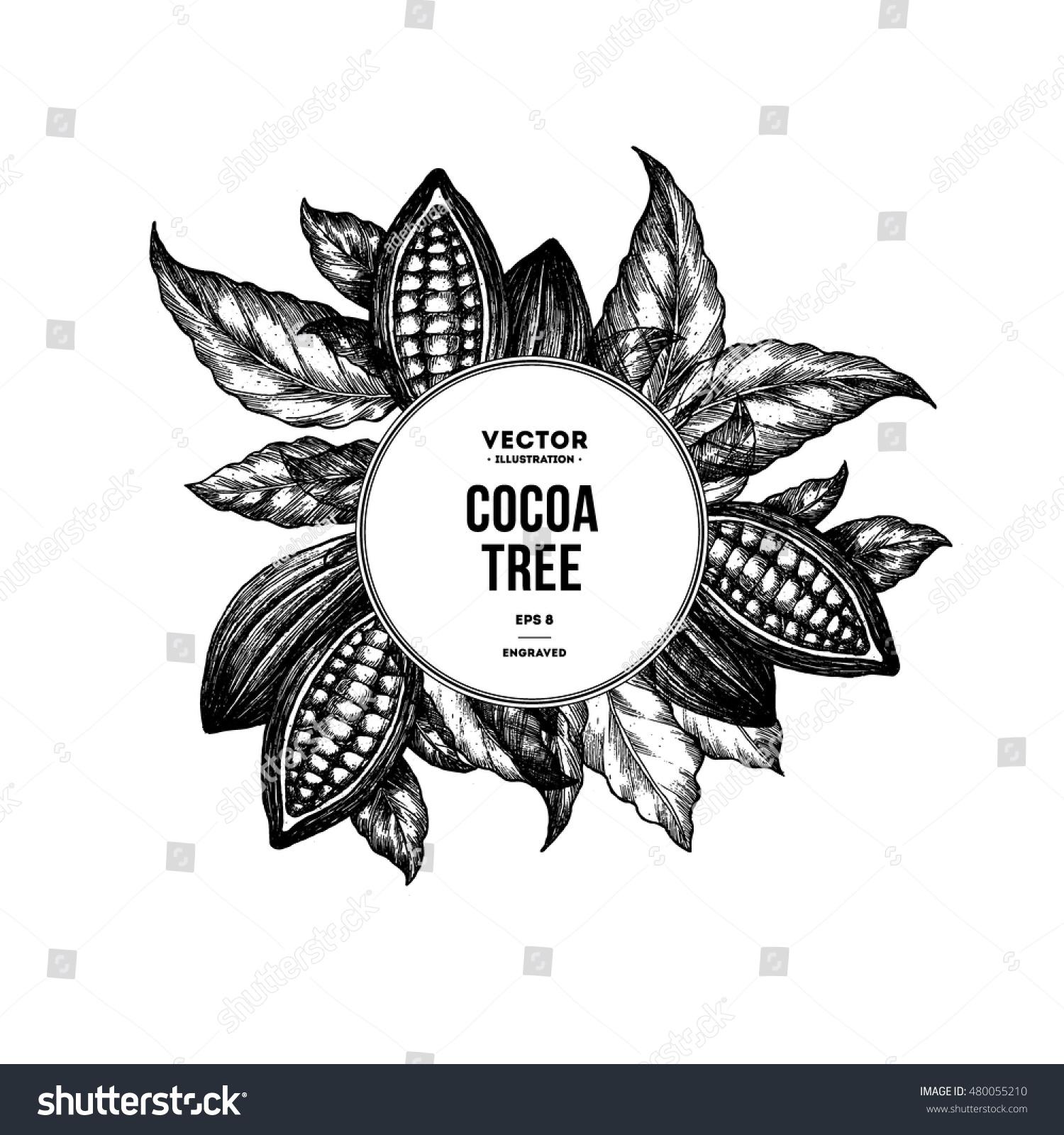 Cocoa Bean Tree Design Template Engraved Stock Vector (Royalty Free ...