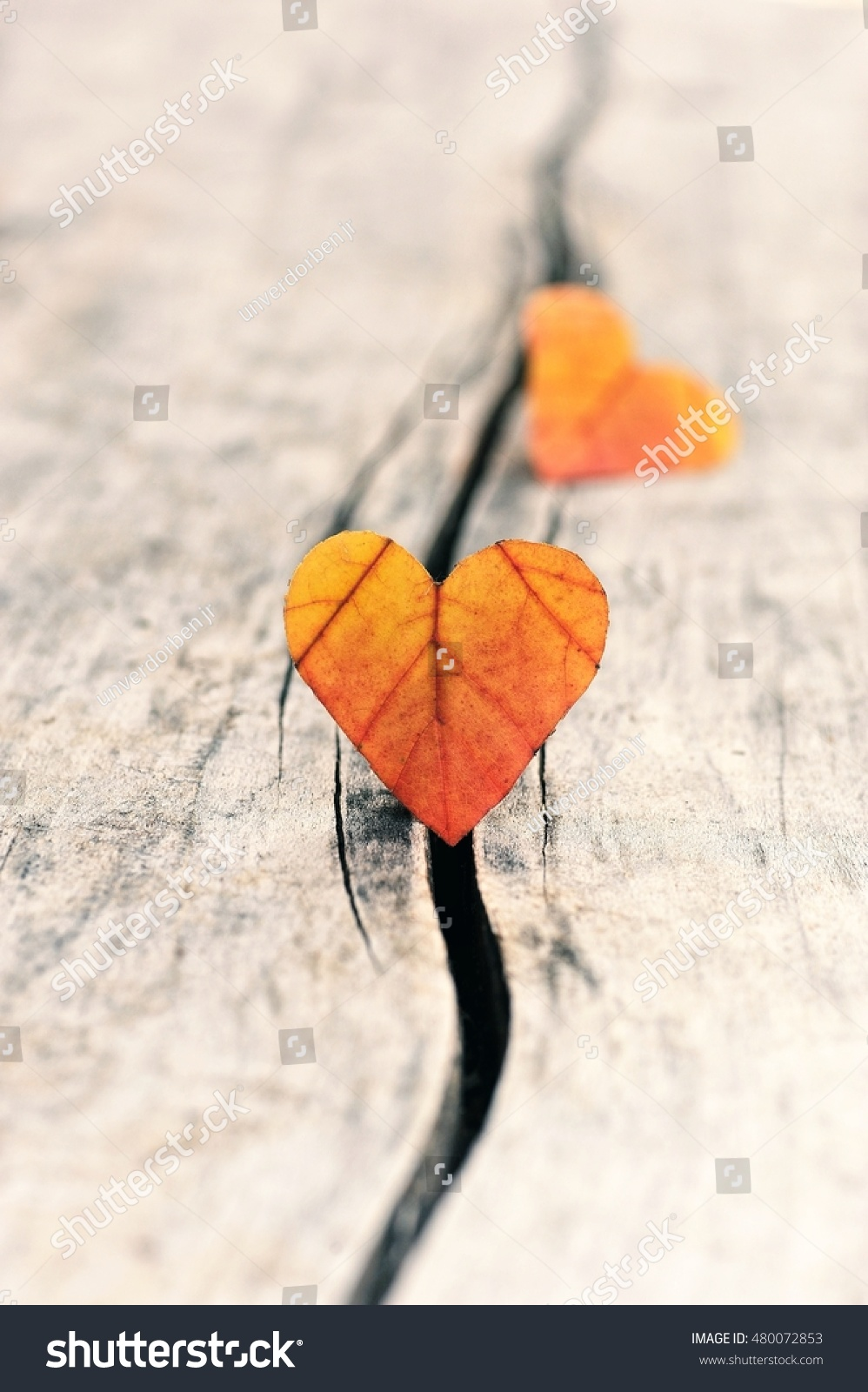 Autumn Leaf, Heart. Fall Background For Love.