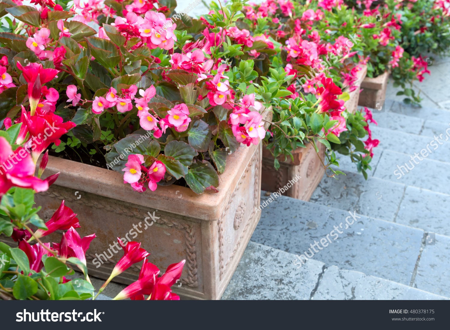 Beautiful Flowers Clay Pots Stock Photo Edit Now 480378175