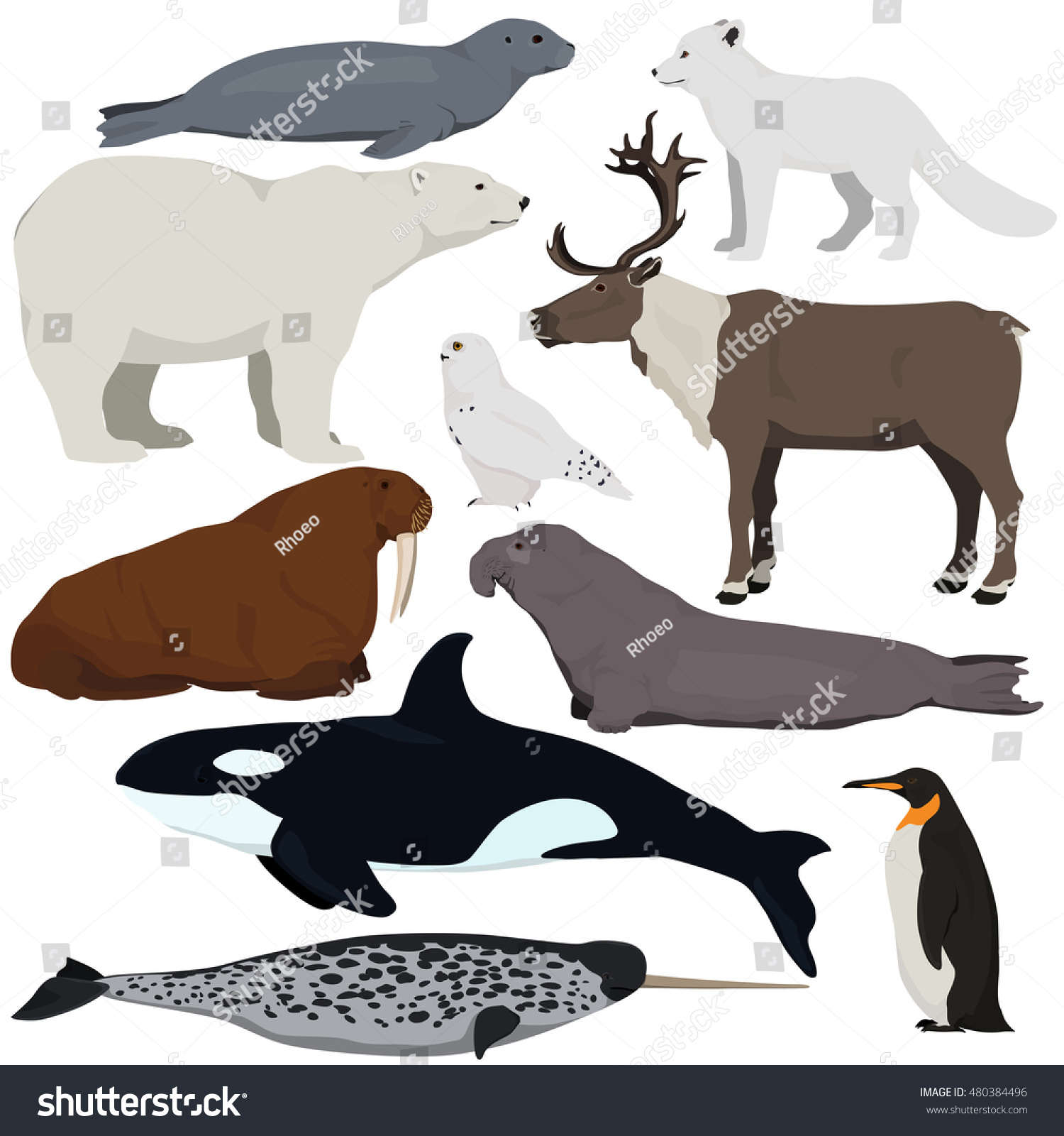 Stock vector ethnic animal doodle detail pattern killer whale - Set Of Cartoon Arctic And Antarctic Animals Vector Illustration Of Polar Bear Seal