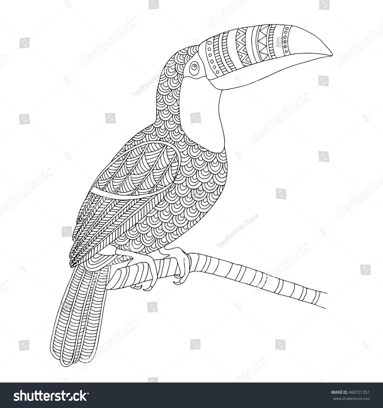 Vector Hand Drawn Toucan Bird Tropical Illustration For Adult Coloring Book Freehand Sketch
