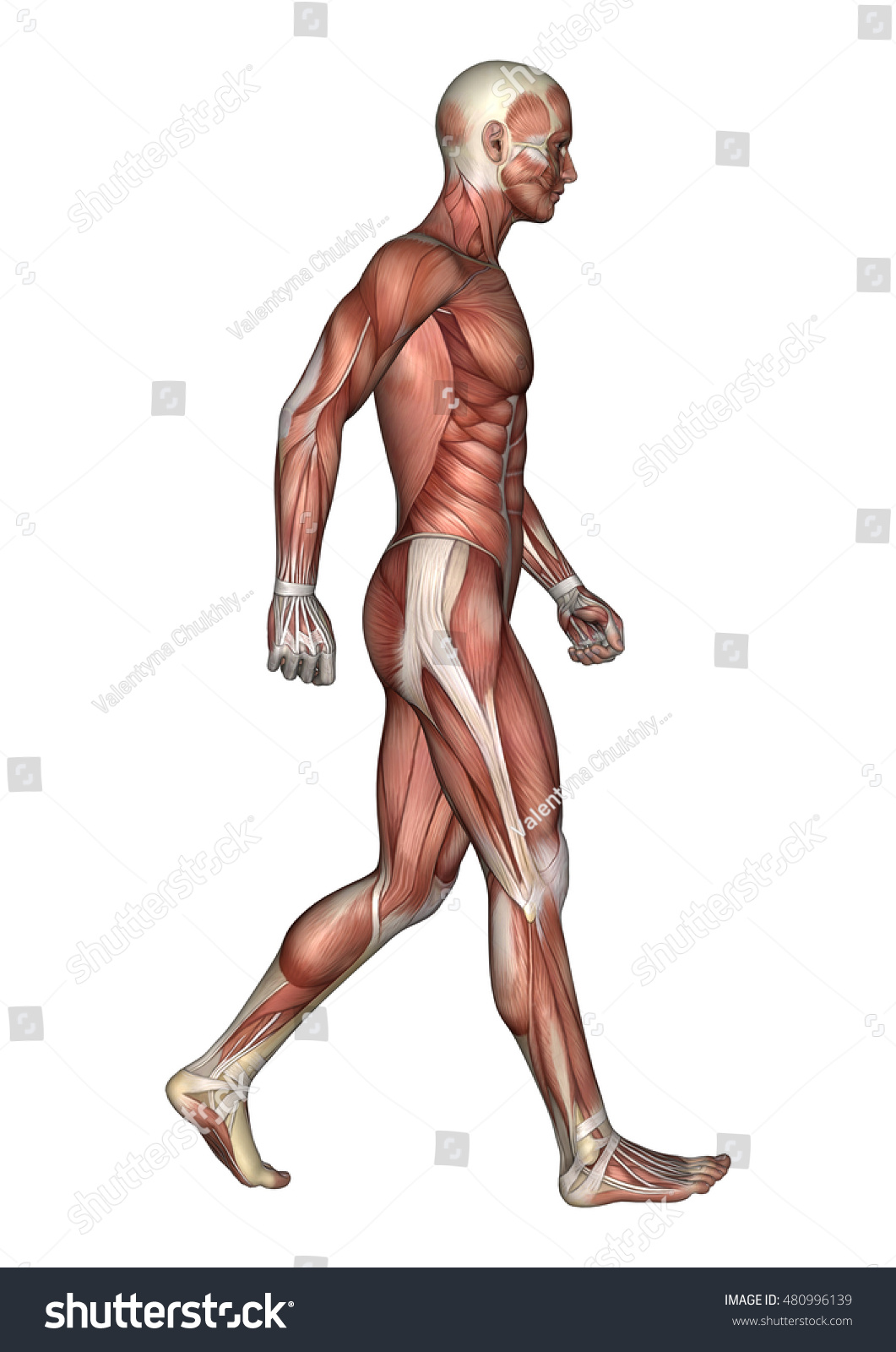 3 D Rendering Walking Male Anatomy Figure Stock Illustration