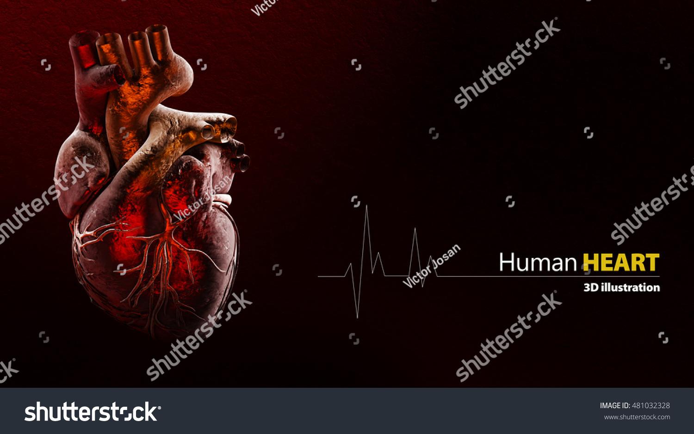 3d Illustration Anatomy Human Heart Stock Illustration 481032328