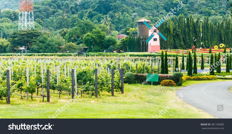 Pattaya Thailand Tourists Visit Silverlake Grape Stock Photo Edit Now 481104085