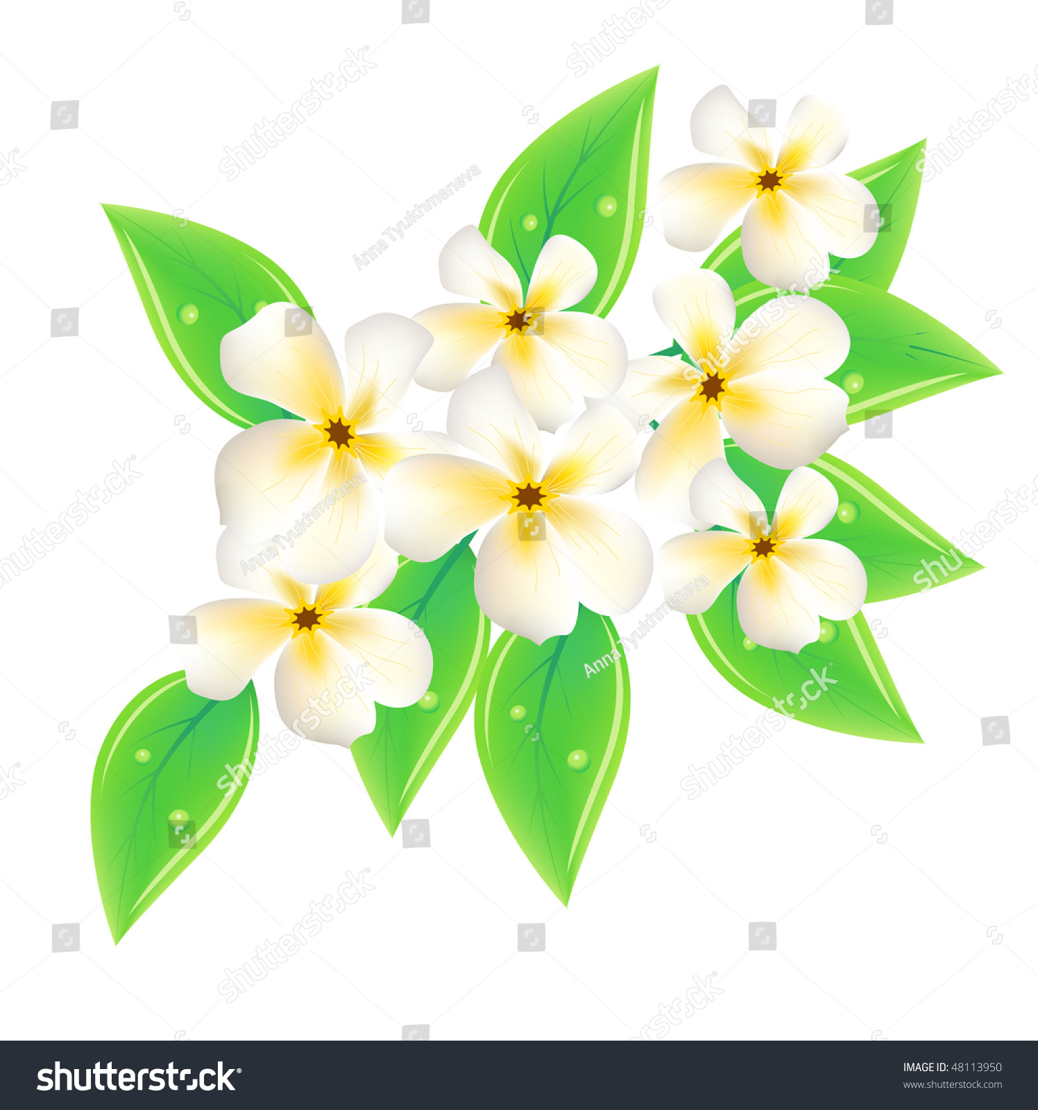 Vector Frangipani Flowers On White Background Stock Vector 48113950