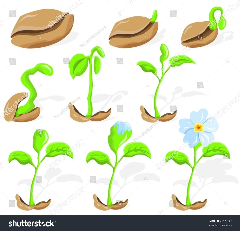 Схема посадки семян для детей в картинках