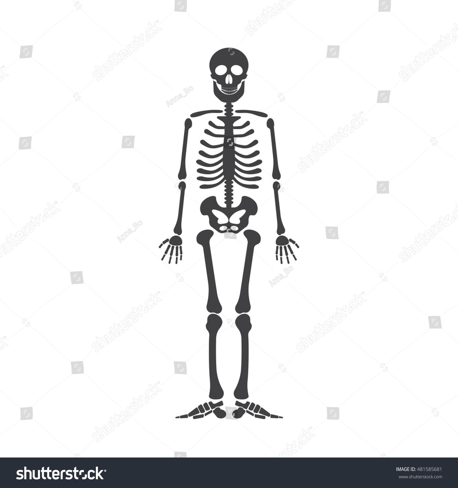 Skeleton Human Anatomy Vector Halloween Black Stock-Vektorgrafik ...