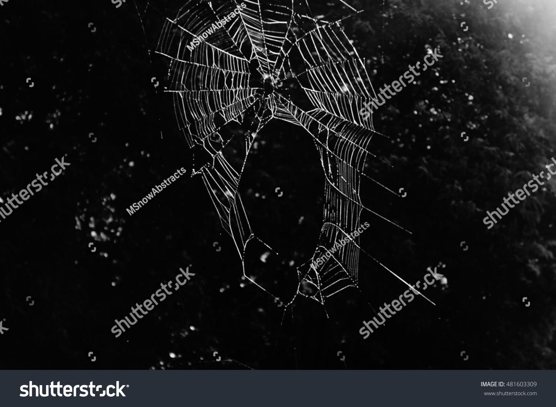 sunlit spiderweb black white stock photo 481603309