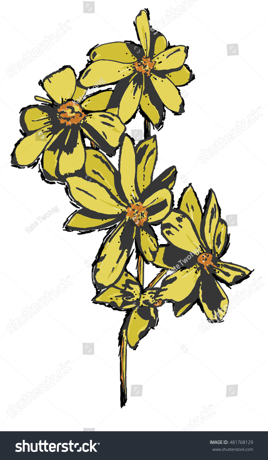 Yellow Flowers Four Blooms On Single Stock Illustration 481768129