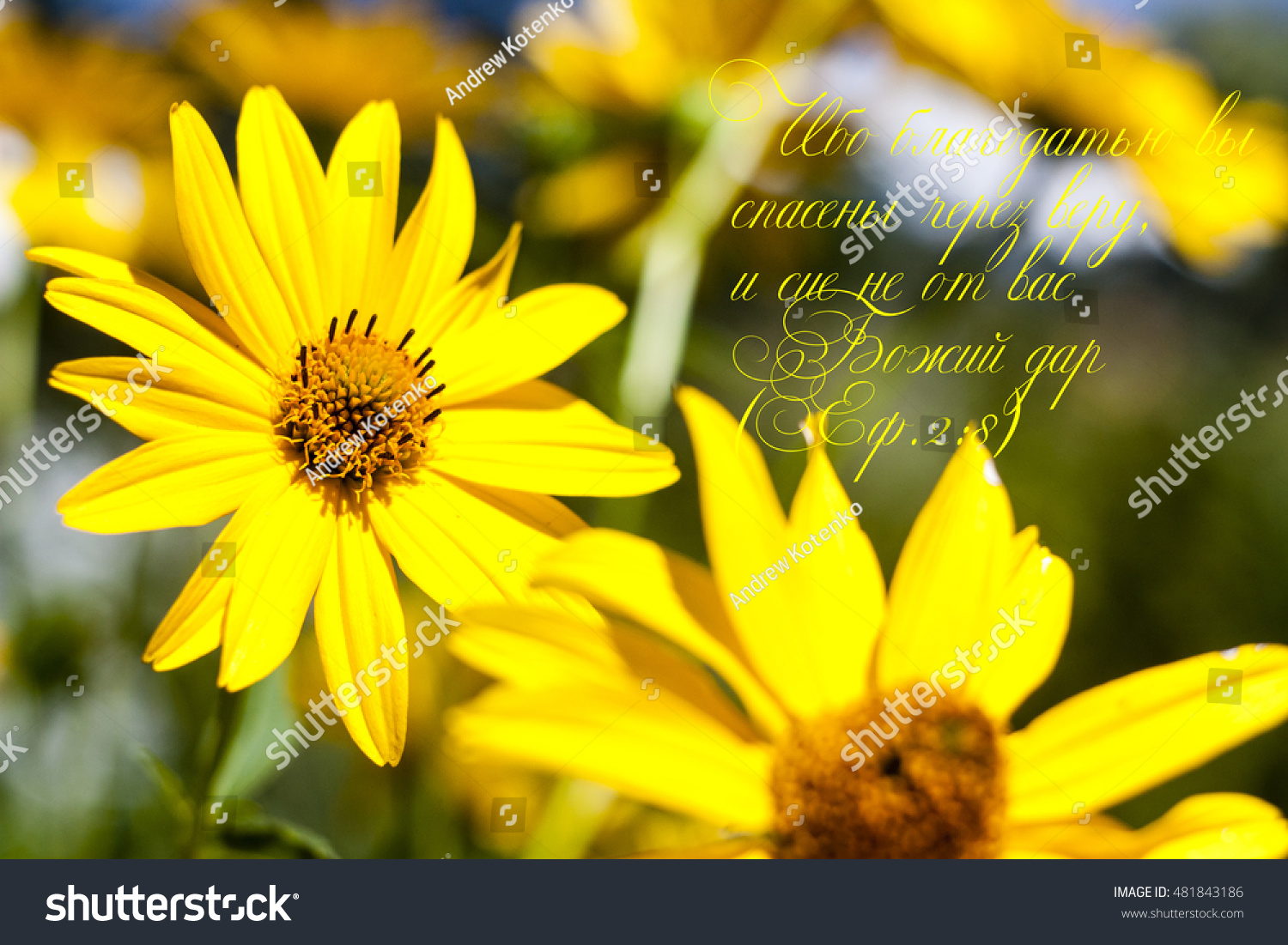 Yellow Flowers Bible Quote Stock Photo Royalty Free 481843186