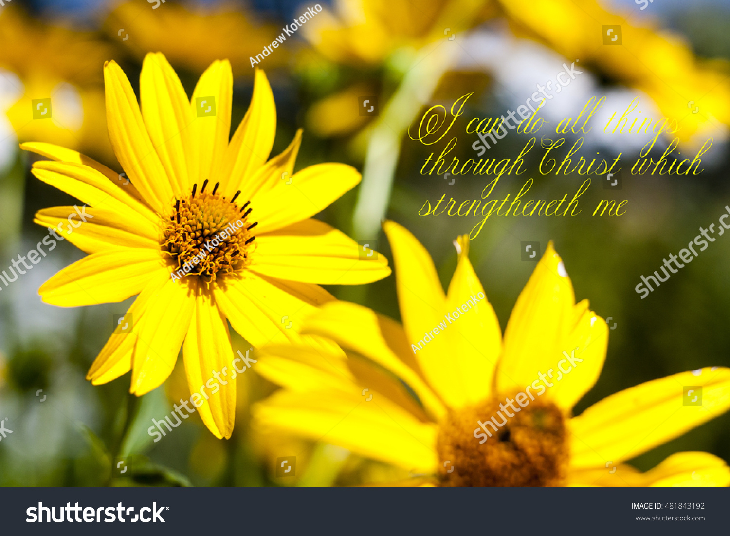 Yellow Flowers Bible Quote Stock Photo Edit Now 481843192