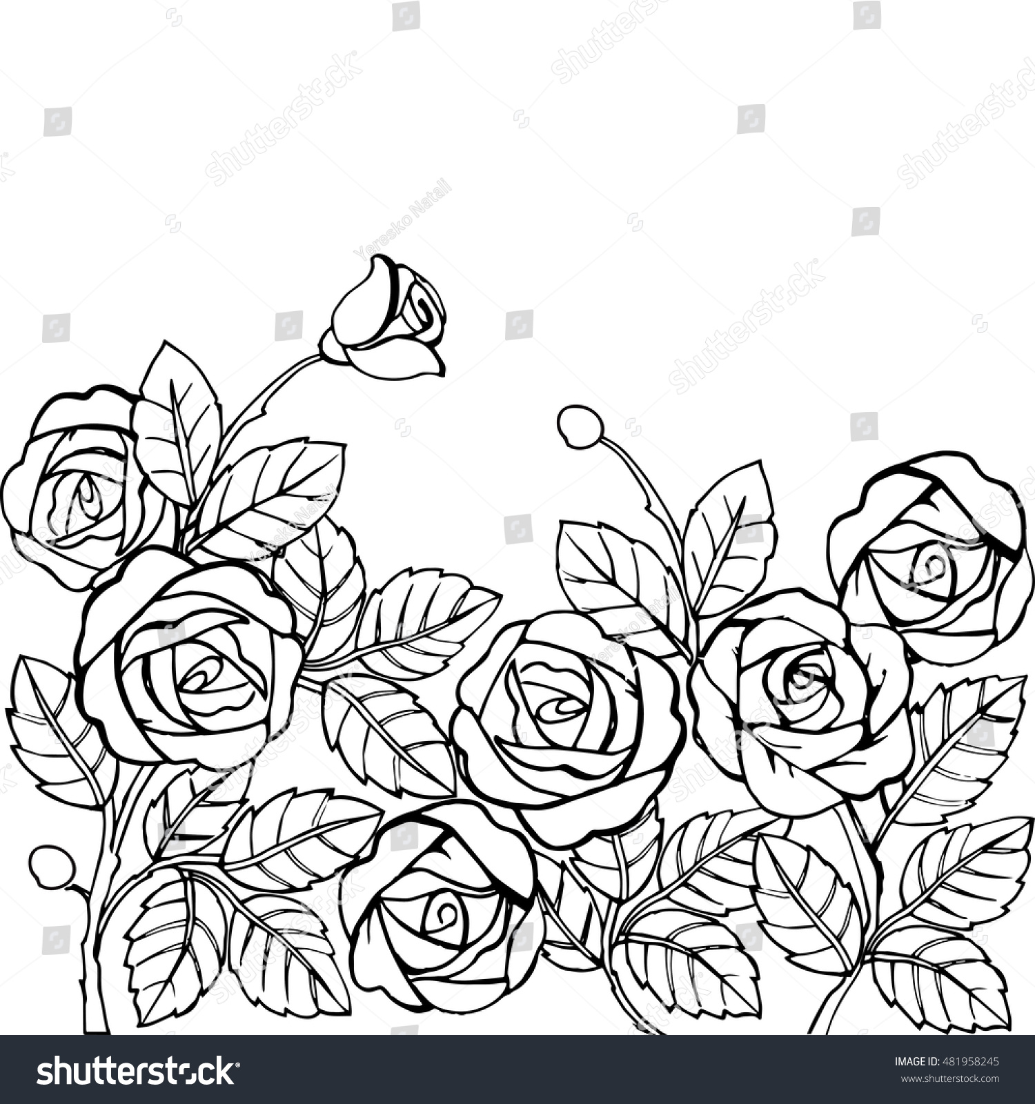 hand drawn garden roses anti stress stock vector 481958245