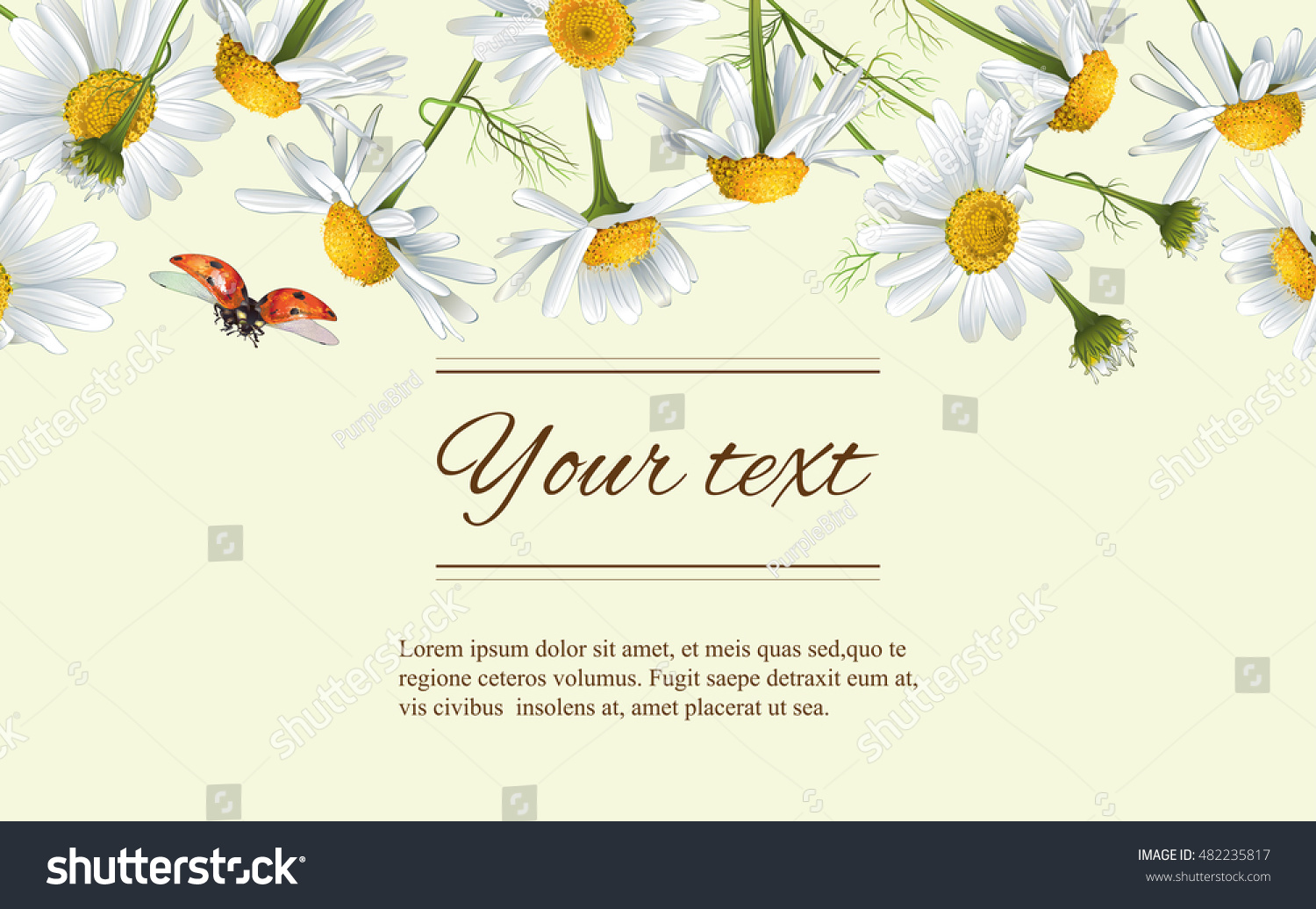 Vector Chamomile Flowers Horizontal Banner Design For Tea Natural Cosmetics Beauty Store